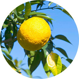 Citrus Junos Seed Extract
