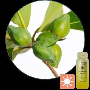 抗氧化能力有效減低日間紫外線等傷害,<br> 保護肌膚。